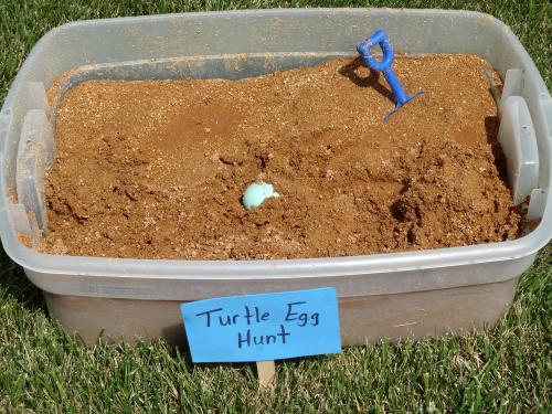 Turtle Egg Hunt