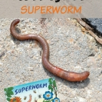 It's summer reading the superhero way! Read Superworm by Julia Donaldson and then try one of the literacy, science or cooking activities for kids!