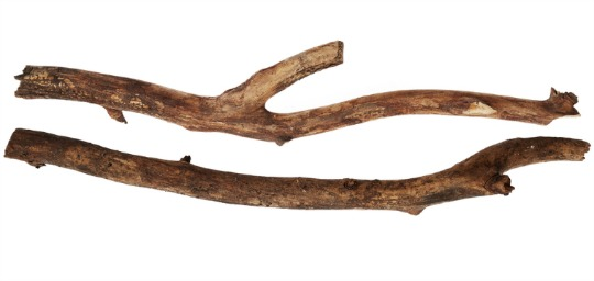 tree sticks