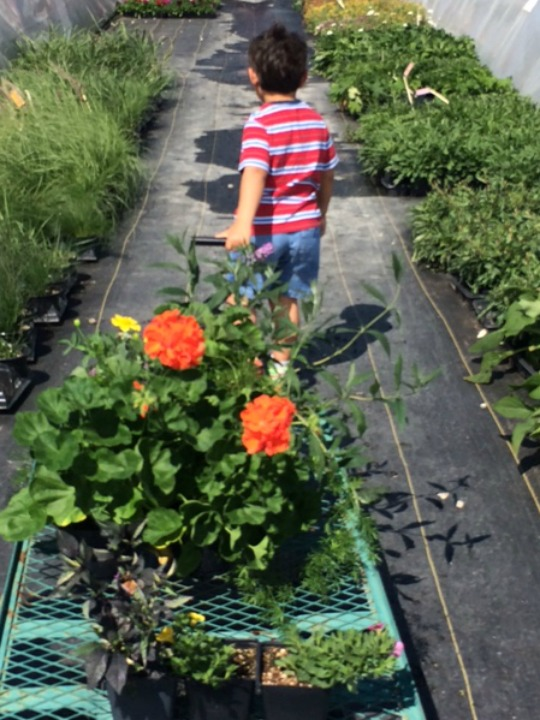 backyard flower shopping
